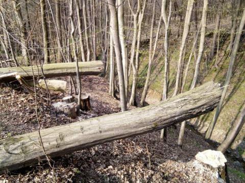 Tragiczny finał prac w lesie. W jednym dniu zginęły aż dwie osoby