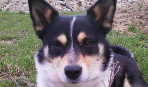 Zaginął pies o imieniu Alvin. Zrozpaczona właścicielka prosi o pomoc