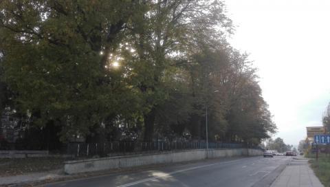 Cmentarz gołąbkowicki. Fot. Iga Michalec