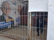 Banery wyborcze w schronisku w Wielogłowach