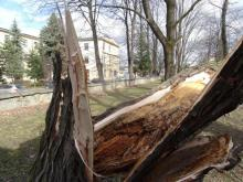 wichura, powalone drzewa w Nowym Sączu, fot. Iga Michalec