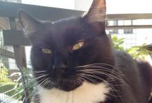 Cały Nowy Sącz szuka cudnego Anatola, kota z Krakowa