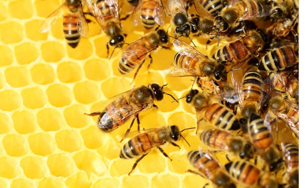 Produkty pszczele mogą być spożywane przez małe dzieci jaki i osoby w podeszłym wieku. Fot. Pixabay