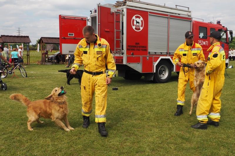 strażacy i psiaki na medal