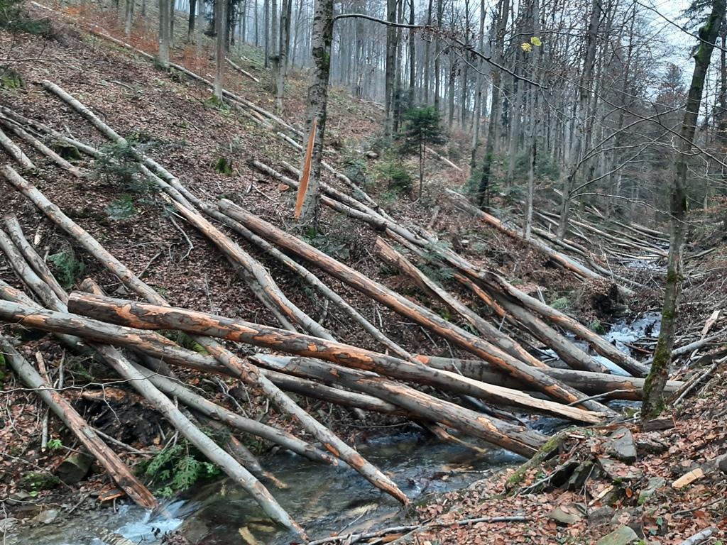"""Piwniczna-Zdrój: tę """"dewastację"""" lasu zawsze zatwierdza minister środowiska"""