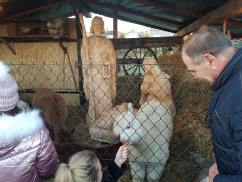 Żywa szopka w Niskowej. Zwierzaki przyciągają tłumy z całej Sądecczyzny