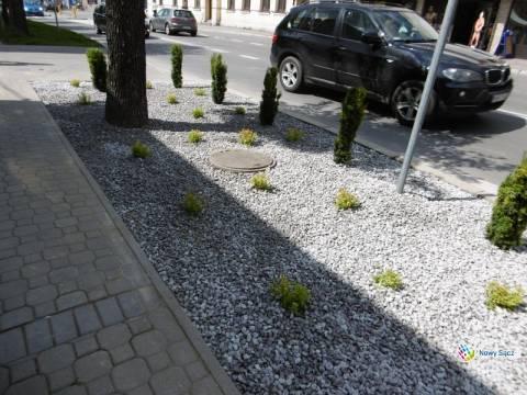 Zieleń kontra parkingi. Czego trzeba sądeczanom na Lwowskiej?