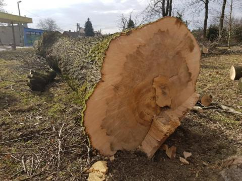 wycięte drzewa w Parku Strzeleckim, fot. Iga Michalec