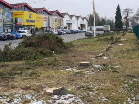Pogrom świerków przy ulicy Magazynowej. Kto i po co wyciął drzewa?