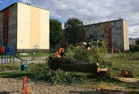 Drzewo, które runęło na dziewczynkę było przeznaczone do wycięcia. Wniosek złożono 4 dni przed dramatem