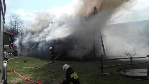 Z płonącego budynku strażacy wyprowadzili 18 krów. Ranny został syn właściciela
