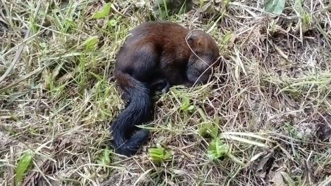 Fotozagadka: co to za zwierzę? Weź udział w naszym konkursie