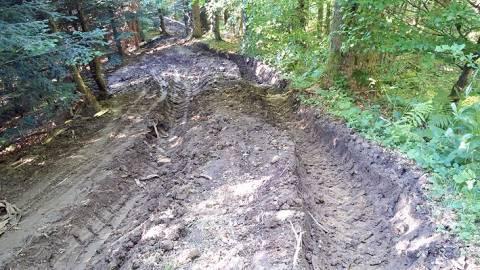Zbrodniarz z Puszczy Białowieskiej zaatakował w sądeckich lasach!