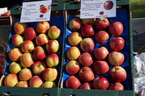 jabłka, przetwórstwo rolne