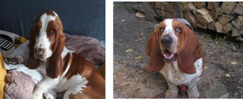 Towarzystwo Opieki nad Zwierzętami: mamy wyrok! Oskarżony znęcał się nad psami