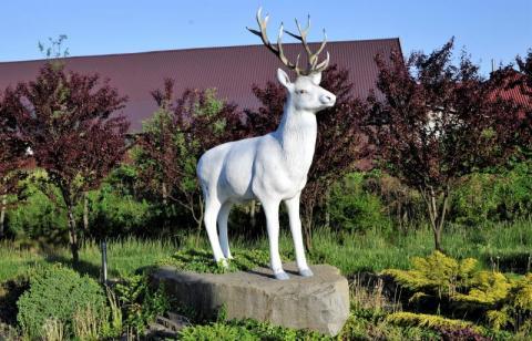 Fotozagadka Gdzie stoi biały jeleń?