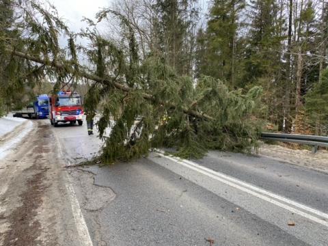 Silny wiatr powalił wiele drzew na Sądecczyźnie. Strażacy mieli sporo pracy