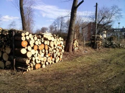 Wycinają dziesiątki drzew na Gorzkowie! To już pogrom [ZDJĘCIA]