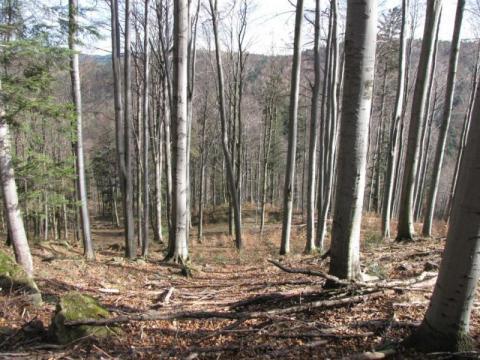 Trzymajcie się od lasów z daleka. Zakaz wstępu przedłużony