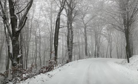 Gródek nad Dunajcem: położenie asfaltu w lesie to nie taka prosta sprawa