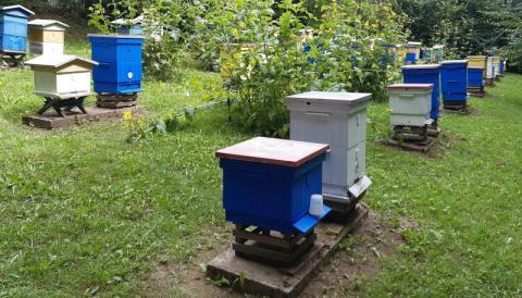 Wiesz jak uratować pszczoły? To naprawdę proste - wystarczą dwie rzeczy