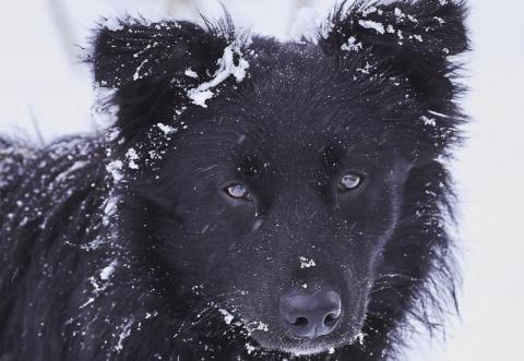 Zimą zwierzęta potrzebują naszej pomocy. Jak o nie zadbać?