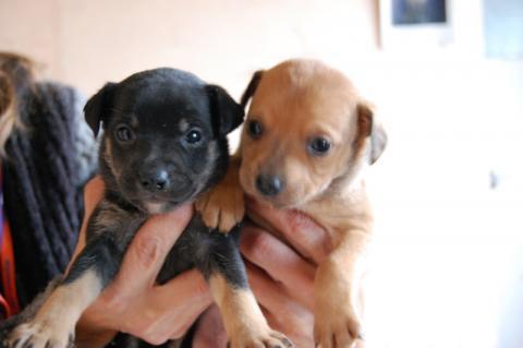 Nowy Sącz: Okno Życia dla psów? Jest pomysł, by uruchomić je na Tłokach
