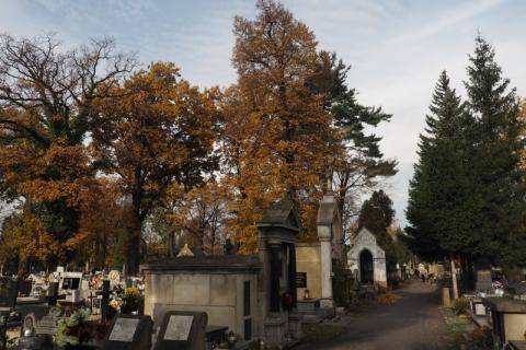 cmentarz, fot. Iga Michalec