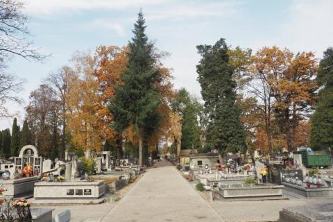 Cmentarz komunalny w Nowym Sączu, fot. Iga Michalec