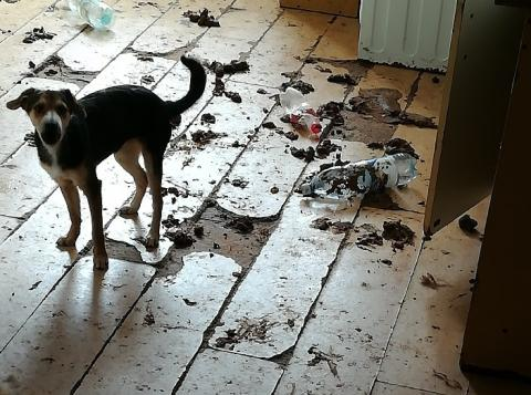 Psia apokalipsa: ile miasto zapłaci za remont zdewastowanego mieszkania?