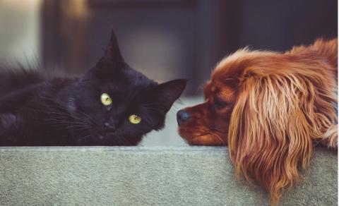 Pies i kot mogą się zarzazić śmiertelnym koronawirusem? Naukowcy już to wiedzą