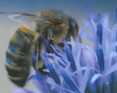 pszczoły, konkurs Kumora, Jacek Nowak
