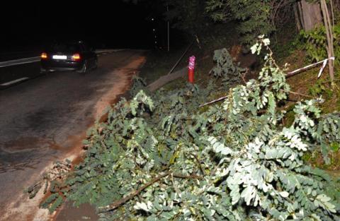 Wypadek na Tarnowskiej w Nowym Sączu. Kierowca skosił słup i drzewo. Fot. TK