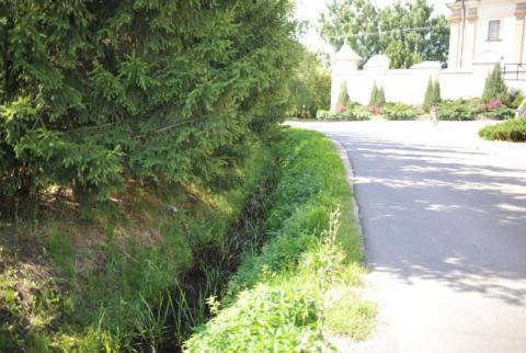 Samorządy przeciwdziałają skutkom suszy. Będziemy mieli więcej zieleni