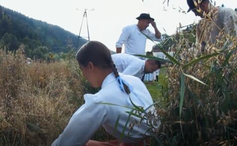 Zespół Dolina Słomki pokazał jak wyglądały tradycyjne żniwa