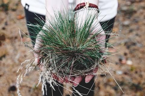 Zwalczanie chwastów: Ocet jako ekologiczny środek przeciw chwastom na wiosnę i w sezonie