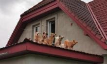 Nie miał środków do życia, a w domu przetrzymywał 28 psów [ZDJĘCIA]