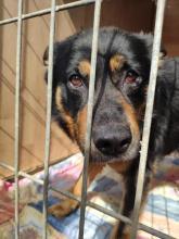 Fot. Schronisko dla psów w Wielogłowach