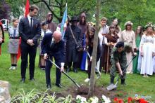Dąb 100-lecia niepodległości rośnie na plantach
