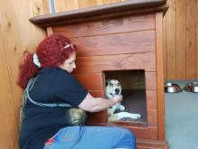 Schronisko dla bezdomnych zwierząt w Nowym Sączu otwarte, fot. Iga Michalec