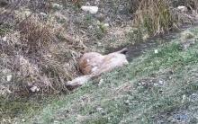 Dzikie zwierzę wbiegło na drogę. Kobieta w ciąży trafiła do szpitala