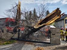 Zasłabł za kierownicą ciężarówki i uderzył w drzewo na ul. Nawojowskiej [FILM]