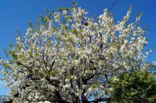 Wiosna nie przestrzega harmonogramu