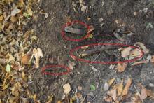 Zgroza w lasku falkowskim: mężczyzna nadział się na żelazne pręty