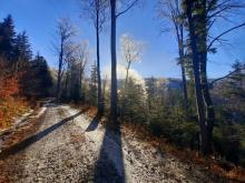 Skarby nawojowskich lasów - zobaczcie je z bliska. Czekamy na wasze prace
