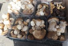 Są już grzyby na Maślanym rynku