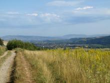 Ścieżka w Rytrze, fot. Marek Ryglewicz