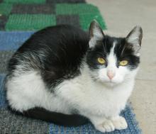 Nowy Sącz: ile miasto płaci za sterylizację dzikich kotów?
