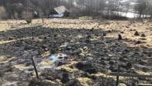 Wyjrzało wiosenne słonko i już podpalają trawy. Zaczyna się niechlubny sezon