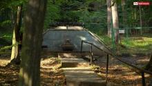 Ukryte w cieniu parku szczawnickie dary natury. Szczawy dobre na wszystko